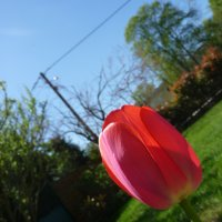 Tulipe (part 2)