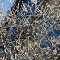 Frozen tree (part 2)